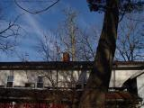 Roofline, Bare Trees, Groveland, NY