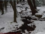 Winter Brook Cutting Through Wooded Snow
