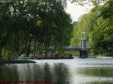 Swan Boats and Willows, Boston Public Garden