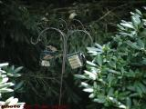 Birds Feeding On Suet, Dorchester, Massachusetts