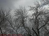 Mostly Cloudy With Mixed Precipitation on Trees, Medford