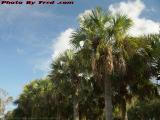 Palms on Partly Cloudy Skies, Sawgrass Mills, Sunrise